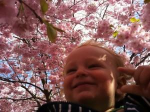 Hugooch våren i Hammarby Sjöstad