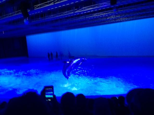 Delfinshow på Kolmården