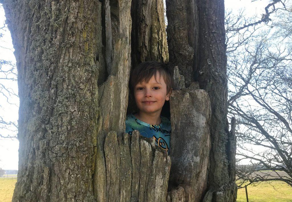 Hugo i ett träd