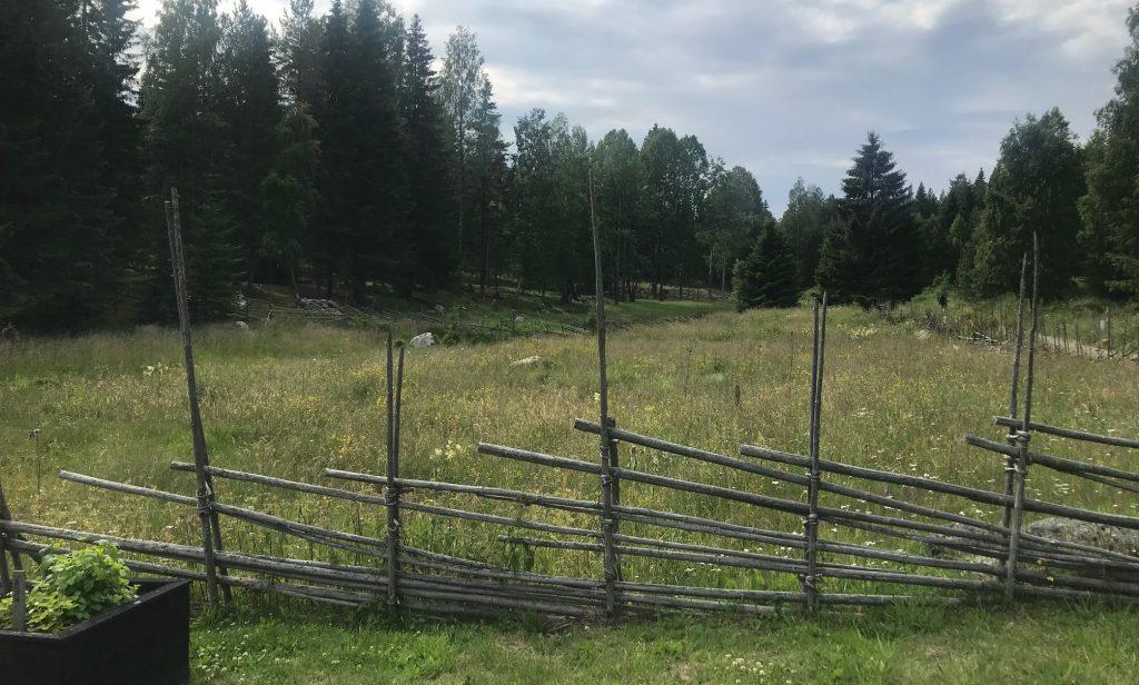 Äng och gärdesgård i Sundvall