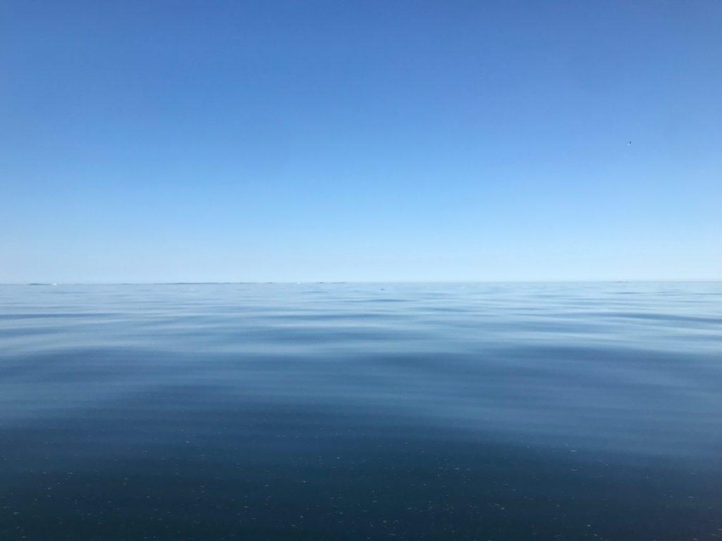 Sälsafari på spegelblankt hav