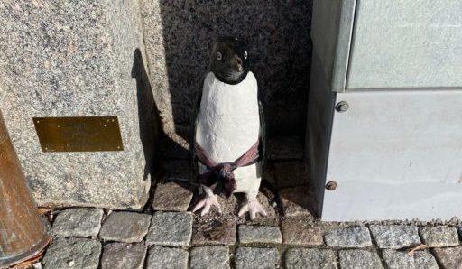 Pingvin av Linnea Jörpeland